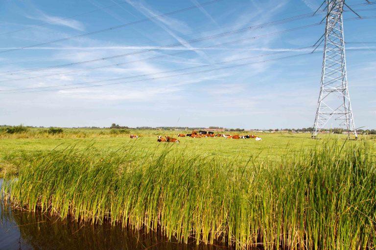 Foto met uitzicht over Oostzanerveld met koeien en hoogspanningsmast. F.L.Snijders